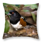 Spotted Towhee Pipilo Maculatus Throw Pillow