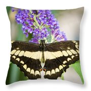 Spread Your Wings My Little Butterfly  Throw Pillow
