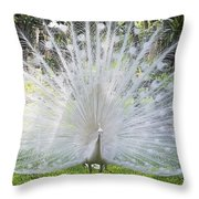 Spreading Peacock Display Throw Pillow