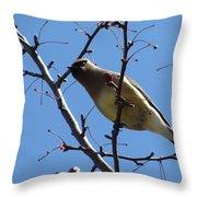 Spring Bird And Berries Throw Pillow