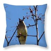 Spring Bird Singing Throw Pillow