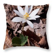 Spring Bloodroot Wildflower 2 Throw Pillow