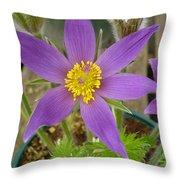 Spring Blooms Of 2013 B Throw Pillow