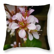 Spring Blooms Of 2013 D Throw Pillow