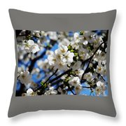 Spring Blossoms, Baltimore Throw Pillow