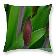 Spring Buds Amaryllis Throw Pillow