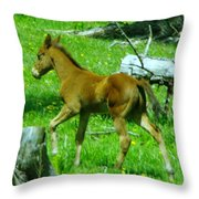 Spring Colt  Throw Pillow