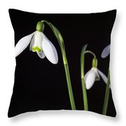 Spring Comes To A Wall Near You Throw Pillow