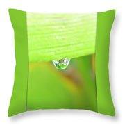 Spring Dewdrop Throw Pillow