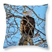 Spring Eagle Throw Pillow