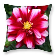 Spring Flower 1 Throw Pillow