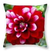 Red Spring Flower Throw Pillow