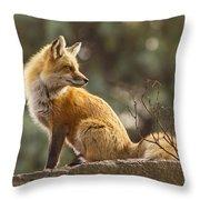 Spring Fox Throw Pillow