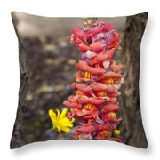 Spring Framed Throw Pillow