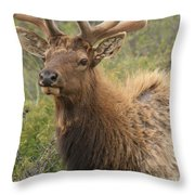 Spring Gaze Throw Pillow