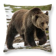 Spring Grizzly Bear Throw Pillow