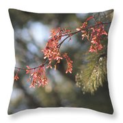 Spring Growth Bathed In Sunlight Throw Pillow