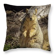 Spring Nature At Spnc Throw Pillow