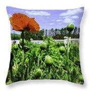 Spring Poppies Throw Pillow