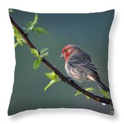 Song Bird In Spring Throw Pillow