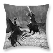 Spring Spat Throw Pillow