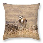 Springbok V3 Throw Pillow
