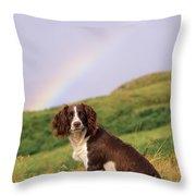 Springer Spaniel Dog Throw Pillow