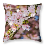 Spring's First Blush Throw Pillow