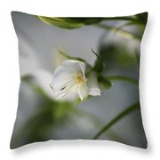 Spring's Late Bloom Throw Pillow