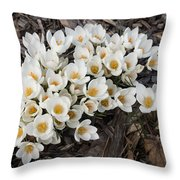 Springtime Abundance - A Bouquet Of Pure White Crocuses Throw Pillow
