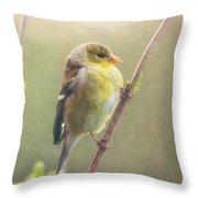 Springtime Goldfinch Throw Pillow