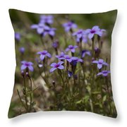 Springtime Tiny Bluet Wildflowers - Houstonia Pusilla Throw Pillow