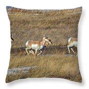 Sprinting Pronghorn Throw Pillow