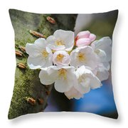 Sprouting Cherry Blossoms Throw Pillow