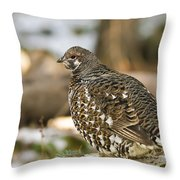 Spruce Grouse In The Snow Throw Pillow