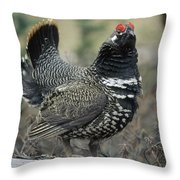 Spruce Grouse Male Courting Alaska Throw Pillow