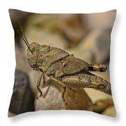 Spur-throated Grasshopper Throw Pillow