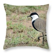 Spur-winged Lapwing Throw Pillow