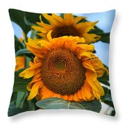 Squamish Sunflower Portrait Throw Pillow