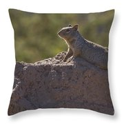 Squirrel   #8424 Throw Pillow