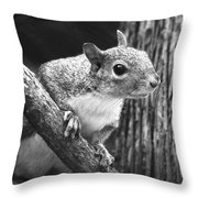 Squirrel Black And White Throw Pillow