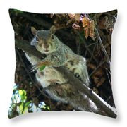 Squirrel By Nest Throw Pillow