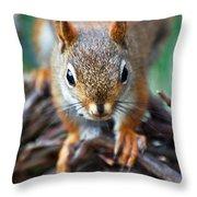 Squirrel Close-up Throw Pillow