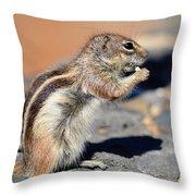 Squirrel Con Queso Throw Pillow