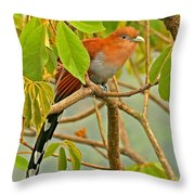 Squirrel Cuckoo In Costa Rica Throw Pillow
