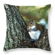 Squirrel In A Tree Throw Pillow