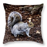 Squirrel In The Park-boston  V6 Throw Pillow