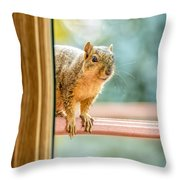 Squirrel In The Window Throw Pillow