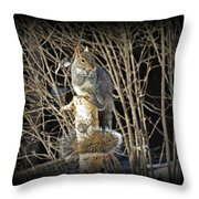 Squirrel On Birch Post Throw Pillow