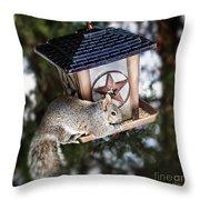 Squirrel On Bird Feeder Throw Pillow by Elena Elisseeva